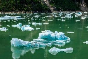Many, many icebergs to avoid